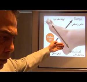 Embedded thumbnail for  من دورة رفلكسولوجي القدمين شرح العظام